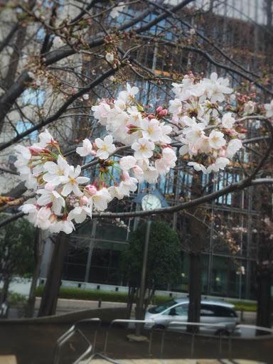 春が近づいて参りました🌸