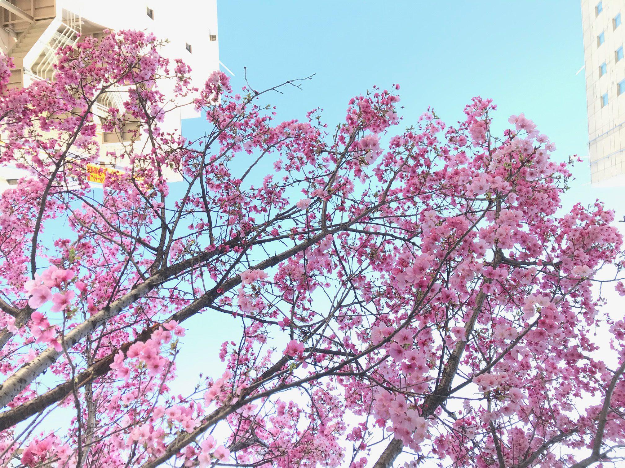 【桜🌸春の訪れ】