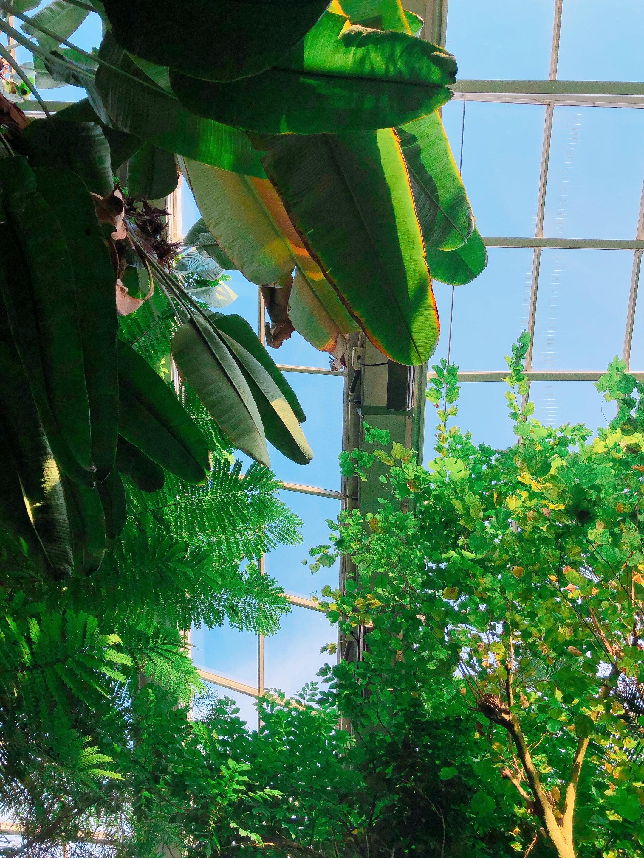 【観光情報】福岡市植物園