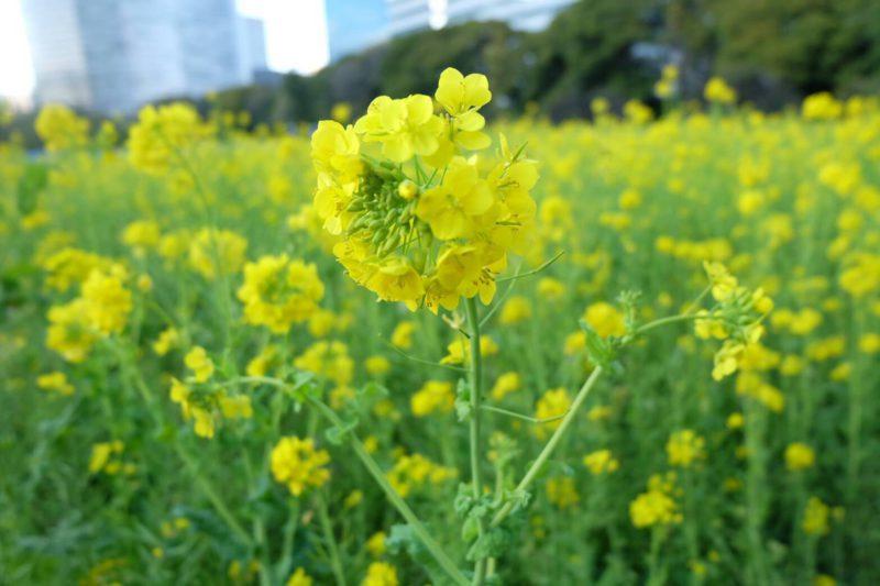 【お花見スポット~浜離宮恩賜庭園♪~】