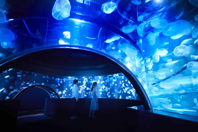 【近隣施設情報】京都水族館、リニューアル!